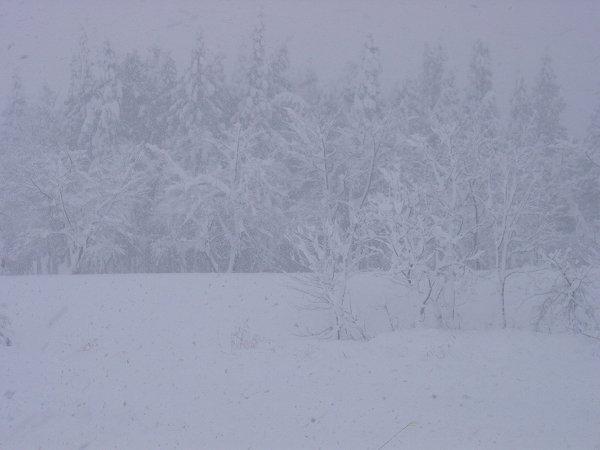 今日も新潟県南魚沼市では雪が降り続いています