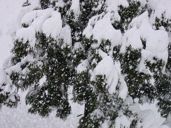 今日もまた新潟県南魚沼市は雪です