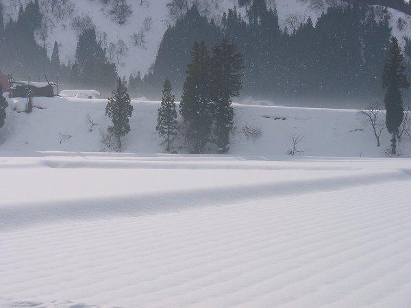 朝日が田んぼの雪面に反射してまぶしいです