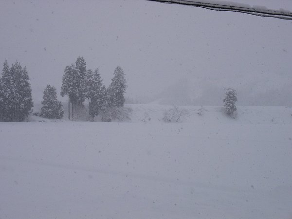 魚沼ではまた少し雪が積もりました
