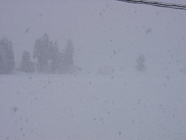魚沼産コシヒカリの田んぼでは昨晩に30cm近くの雪が積もりました
