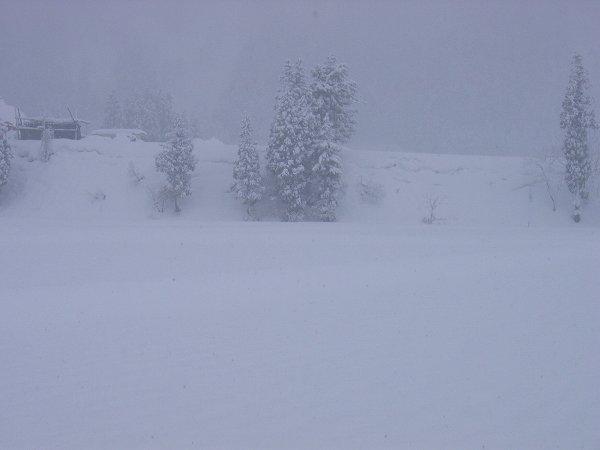 魚沼産コシヒカリの田んぼでは雪がまた20cmくらい降りました