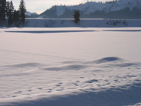 雪が解けて田んぼの雪面にえくぼができてきました