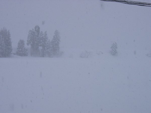今日は大雪の魚沼です