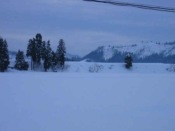 魚沼産コシヒカリの田んぼはくもりで、ときおり雪がちらついていました