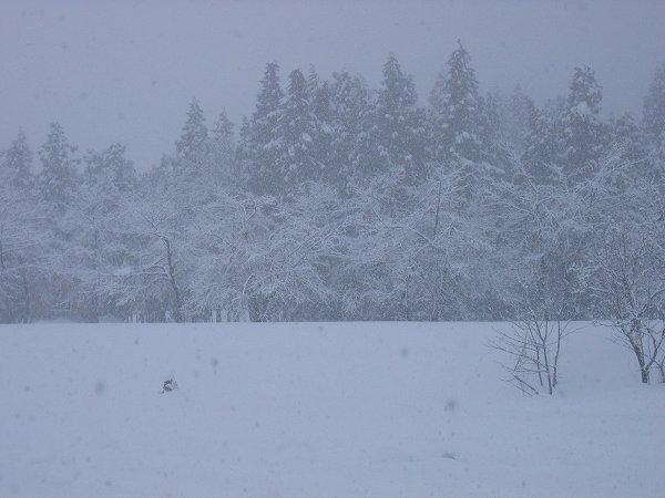 新潟県南魚沼市は細かい雪が降っています