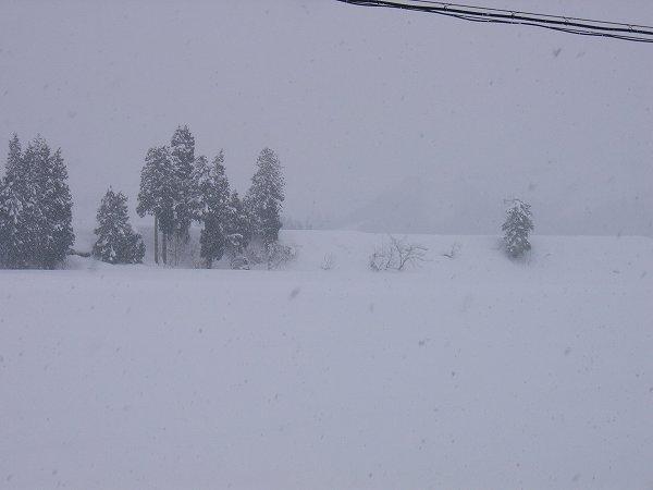予報に反してあまり雪が降っていません