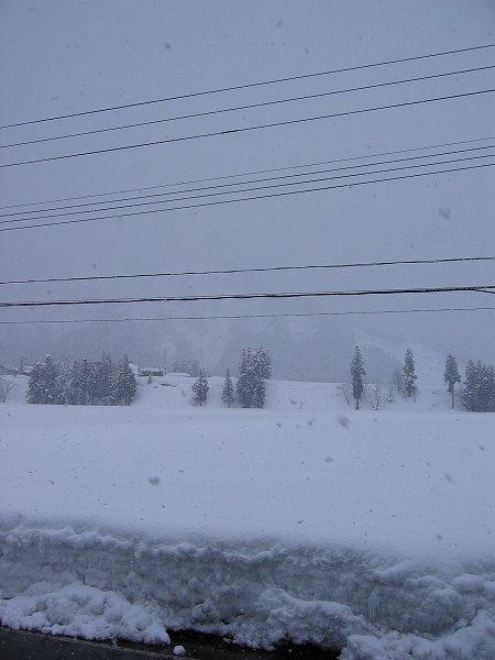 今日も雪ですがあまり積もっていません