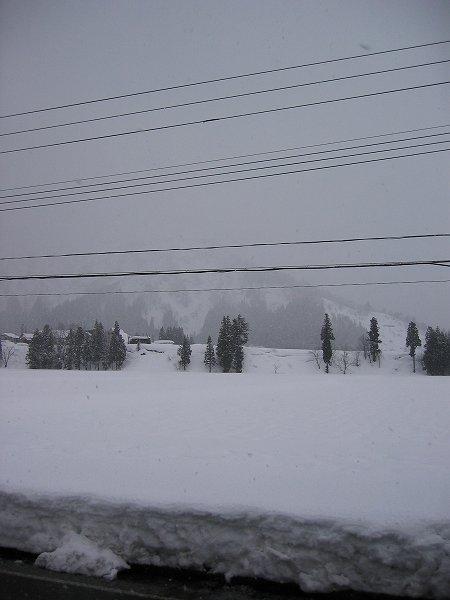 朝になってから雪が降り始めました