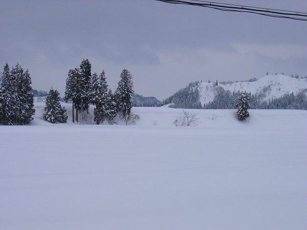 大雪が峠を越えて寒さも弱まっています