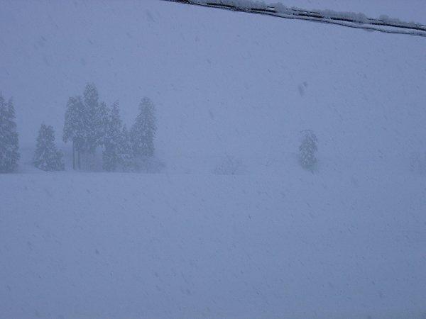 また30cm近く雪が積もりました