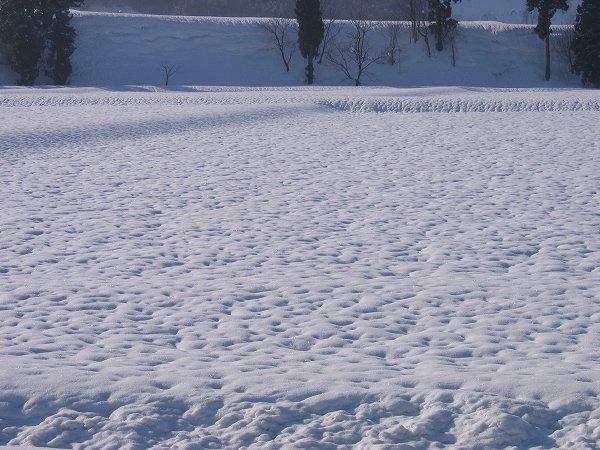 雪が解けて田んぼの雪面にくぼみができてきました