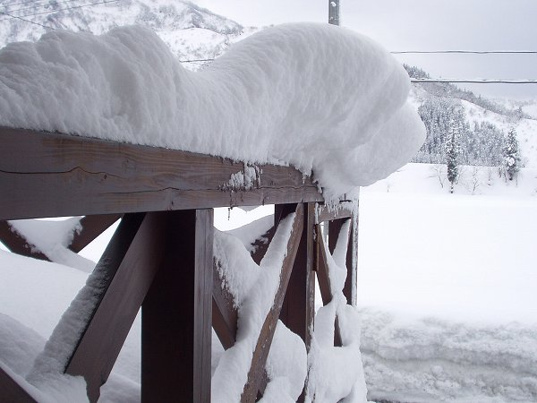 昨晩から30cmちょっとの雪が積もりました