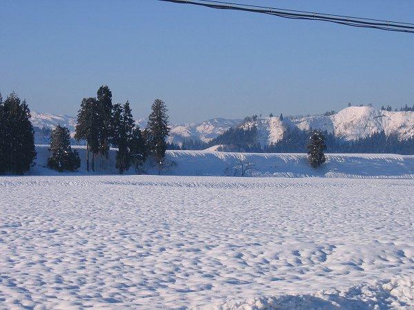 澄んだ青空が広がる冬の魚沼の田んぼ