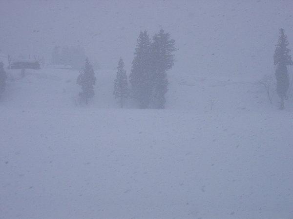 久しぶりに本格的な雪の降り方です@魚沼産コシヒカリの田んぼ