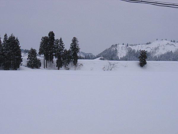 雪が止んで少し明るくなってきました@魚沼産コシヒカリの田んぼ