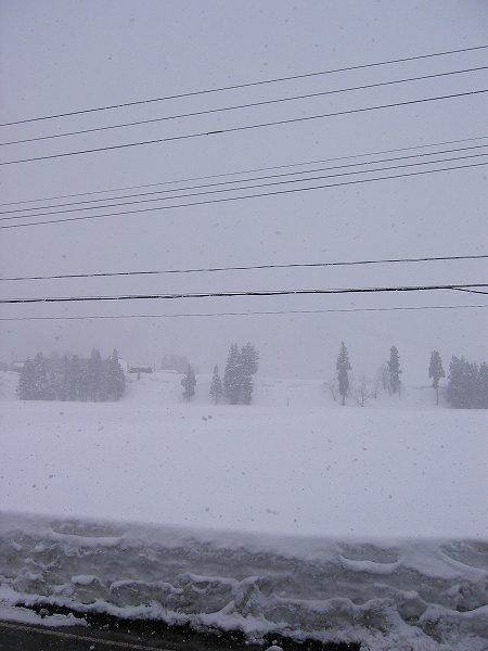 雪が降っていますが、強い降り方でなく道路に積もりません