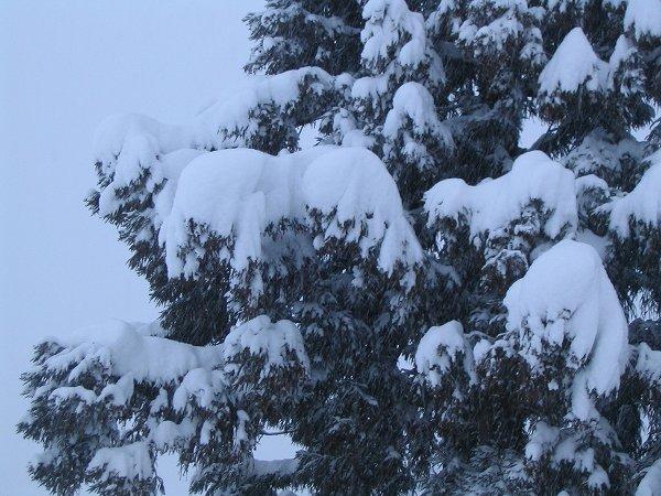 南魚沼市は大雪 ~ 激しく雪が降っています