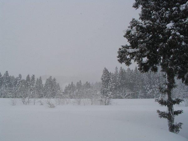 魚沼は2月下旬になってから大雪になっています