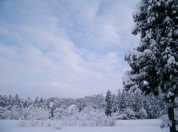 昨晩から今朝にかけて新潟県南魚沼市では10cmくらい雪が降りました