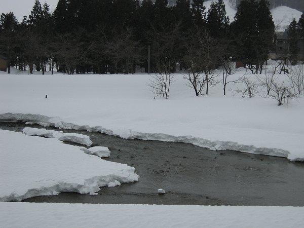 水無川では雪が解けて大きく水面が見えてきました