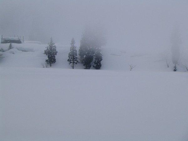 田んぼの向こうの山が霧に覆われています