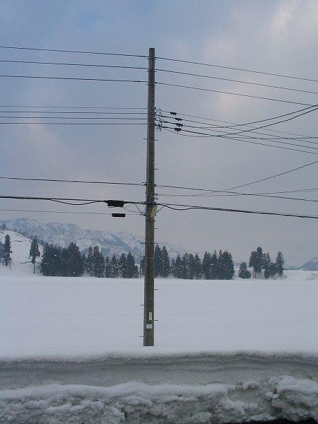 今朝は雪がちらほら舞っています