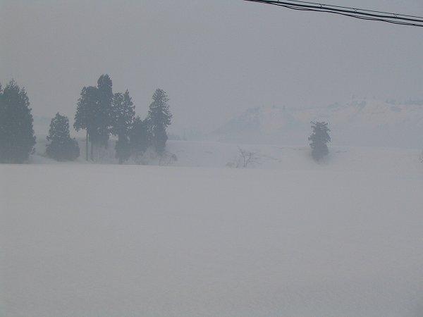 田んぼにかかっていた霧が晴れてきました
