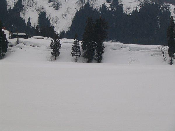 今日の魚沼はくもりですが寒さを感じません
