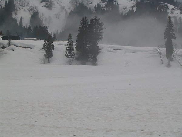 魚沼では雪解けが進んでいます
