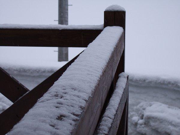 昨晩から少しだけ雪が積もりました