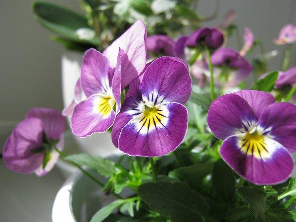 陽ざしが当たる窓辺の花