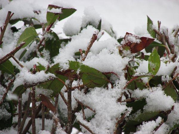 今朝、新潟県南魚沼市ではうっすらと雪が積もっていました