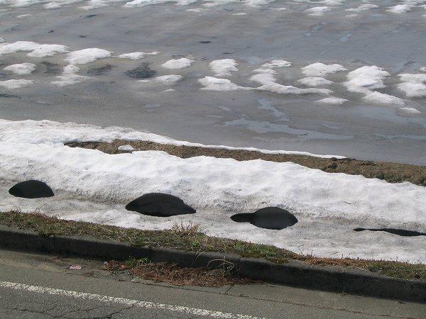 水路を覆っていた雪が解けて大きな穴がいくつもあいています