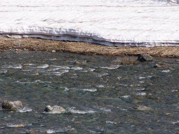 水無川には透き通った雪解け水が流れてきています