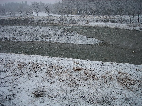 今朝は季節外れの雪になっています
