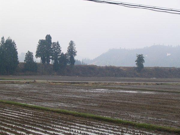 魚沼は今朝も雨で気温が低いです