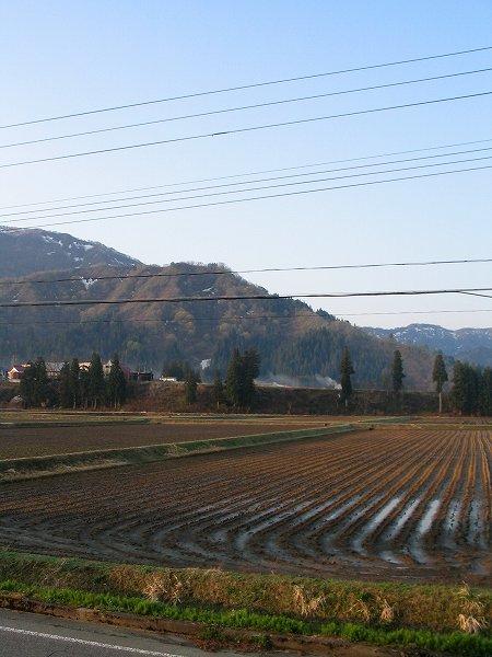 朝日が昇る前の魚沼産コシヒカリの田んぼ
