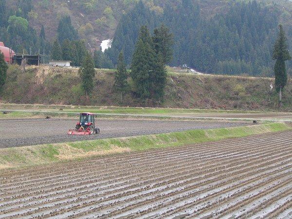 魚沼産コシヒカリの田んぼでトラクターによる田起こし作業が始まりました