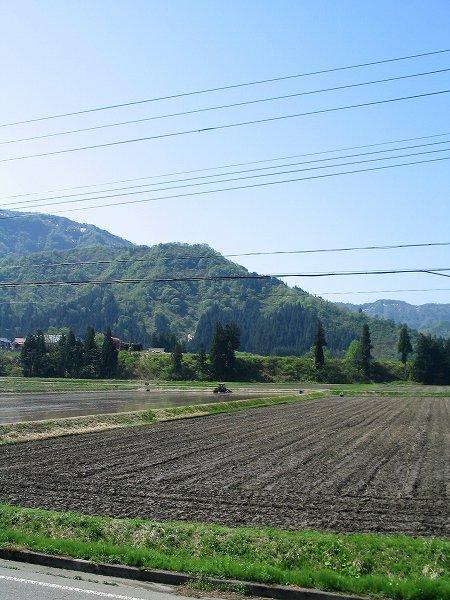 魚沼産コシヒカリの田んぼでは気温が高い日が続いています