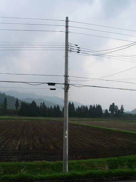 魚沼産コシヒカリの田んぼは雨上がりの朝です