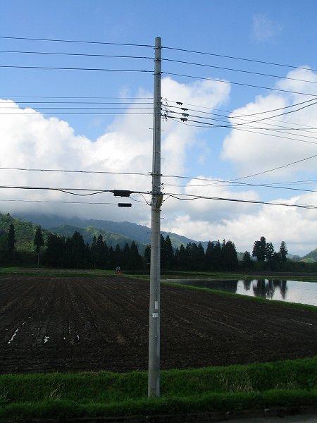 魚沼産コシヒカリの田んぼは今朝も雨上がりです
