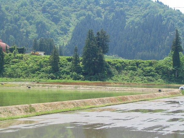 魚沼産コシヒカリの田植え作業が真っ盛り