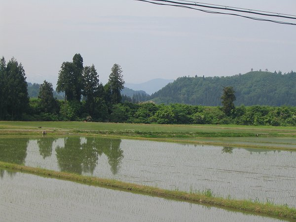 魚沼産コシヒカリの田んぼは涼しくて過ごしやすいです
