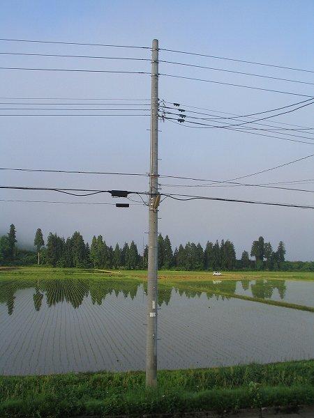魚沼産コシヒカリの田んぼは雨上がりの爽やかな朝を迎えています