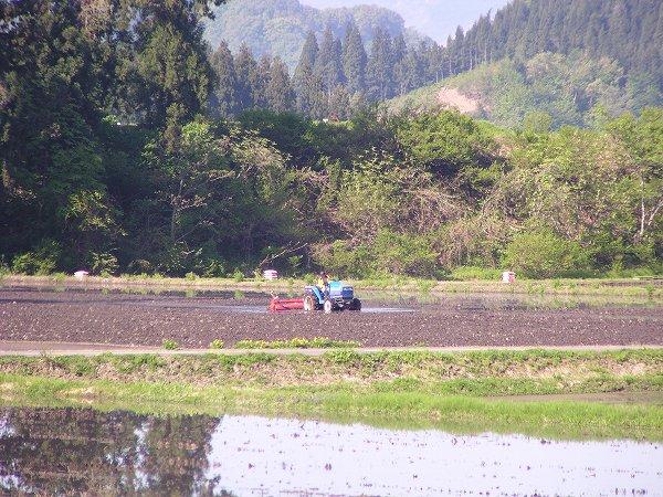 朝早くから田んぼでトラクターが動いています