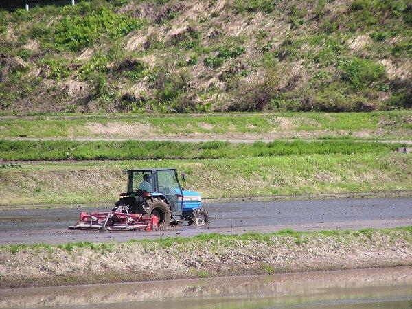 今日はたくさんのトラクターが田んぼで働いています