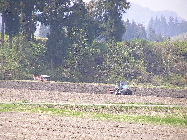 今日は朝早くから田んぼでトラクターが動いています