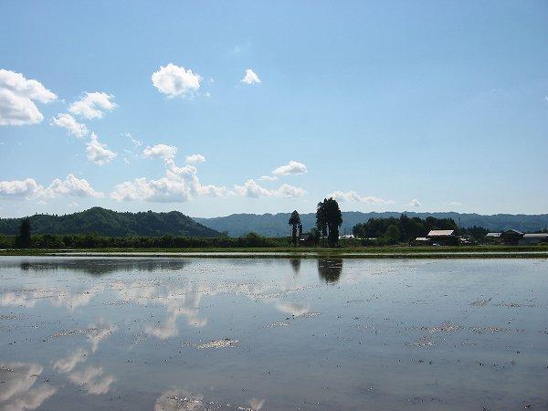 田植えを待つ魚沼産コシヒカリの田んぼ