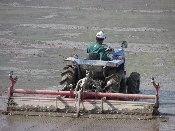 田んぼではトラクターが代掻き作業をしています